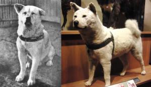 fusion perro