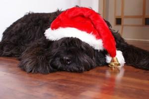 La navidad y tu perro