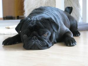 dog-123722_640